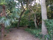 丸山の森緑地