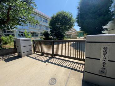 船橋市立八栄小学校の画像1