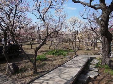 大谷田公園の画像4