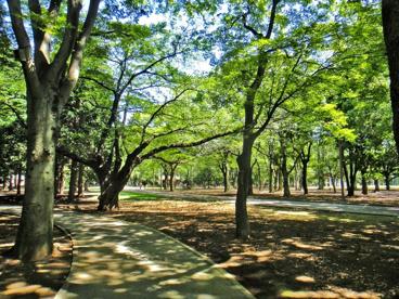 東京都立代々木公園の画像1