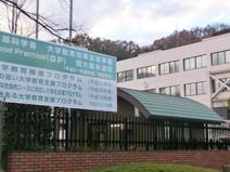 湘北短期大学