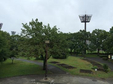 東綾瀬公園の画像5