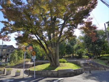 羽根木公園の画像1