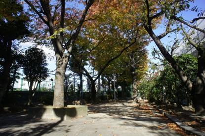 箕輪豊公園の画像2