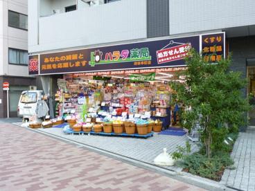 ハラダ薬局渋谷本町店の画像1