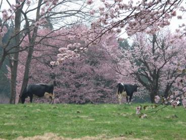 西蔵王放牧場の画像1
