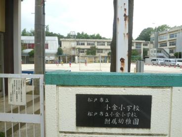 小金小学校の画像1