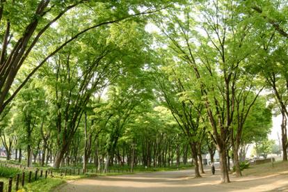 白川公園の画像2