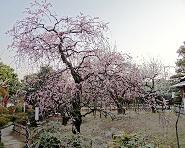 宮内公園 の画像1