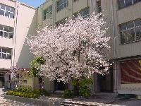 蒲生中学校の画像1