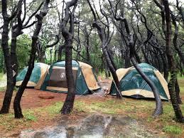 茅ヶ崎市柳島キャンプ場の画像1