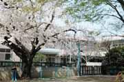 ひばり幼稚園の画像2