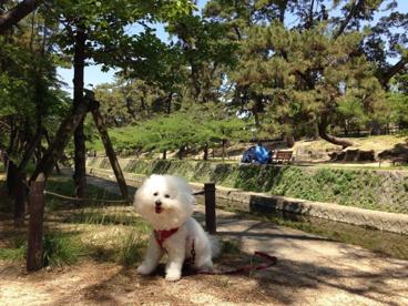 夙川公園の画像1