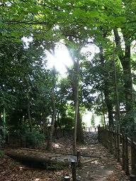 けやき憩いの森の画像2