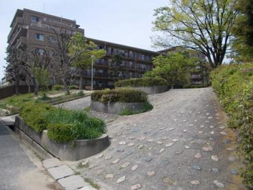 もものき公園の画像3