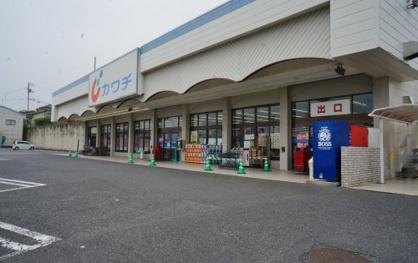 ㈱カワチ薬品 田尻店の画像1