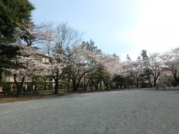 宮前平公園の画像5