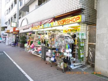 100円ショップ 月下美人の画像2