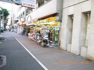 100円ショップ 月下美人の画像4