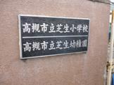 芝生幼稚園