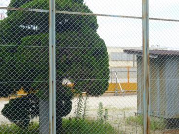 高槻市立 若松小学校の画像5