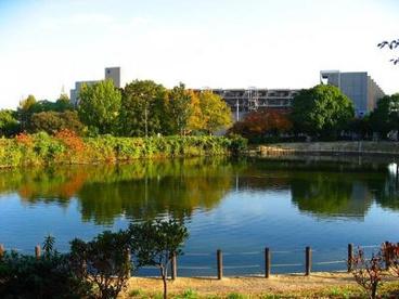 樋之池公園の画像2