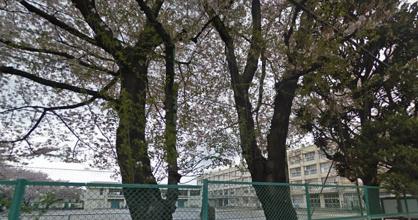 練馬区立練馬小学校の画像1