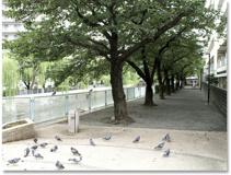 石崎川公園