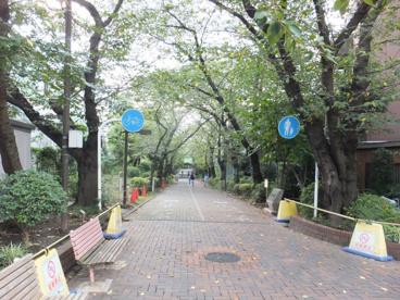南砂緑道公園の画像2