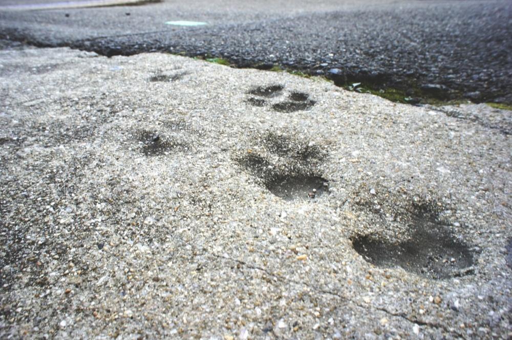 かつてこの地を支配した肉食獣の痕跡!!の画像