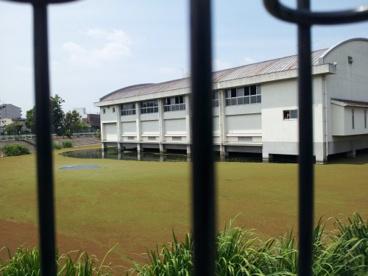 池に浮遊する体育館‥の画像3