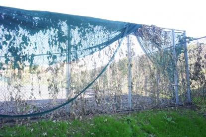 バイオハザード空間への入口の画像4