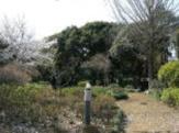 塚越の森緑地