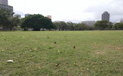 新都心公園多目的広場の画像1