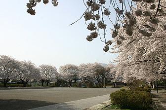 十王公園の画像1
