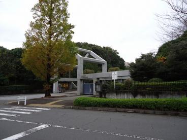 昭和薬科大学の画像1