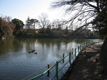 武蔵関公園の画像2