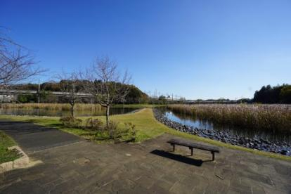 大百池公園の画像3