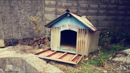 今は亡きラッキーの家の画像1