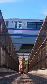 大阪モノレールが頭をかすめる歩道橋#1の画像4