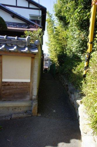 竹のパワーを感じる道の画像