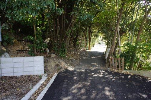 竹林のトンネルの画像