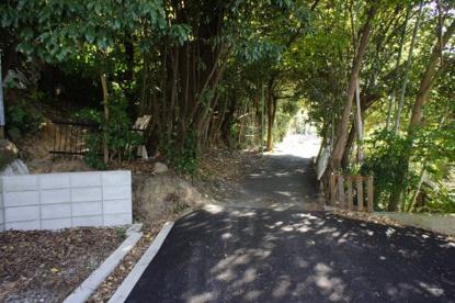 竹林のトンネルの画像1