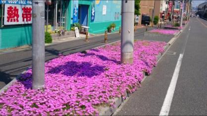 ピンクの花じゅうたんの画像2