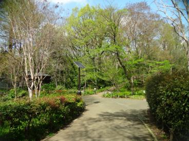 都立林試の森公園の画像2