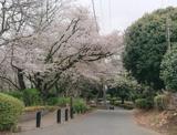 神之木公園