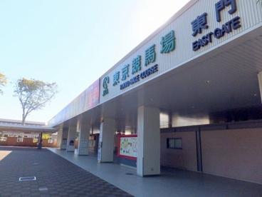 東京競馬場の画像1