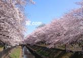 善福寺川緑地公園 南阿佐ヶ谷