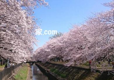 善福寺川緑地公園 南阿佐ヶ谷の画像1