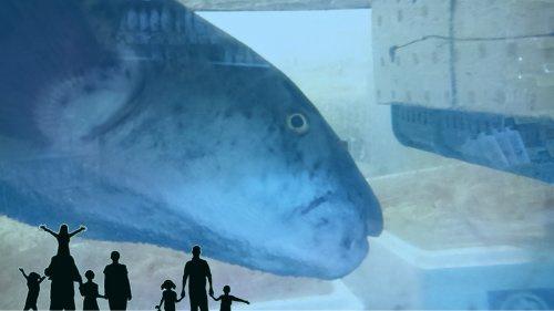 蛍池水族館の画像